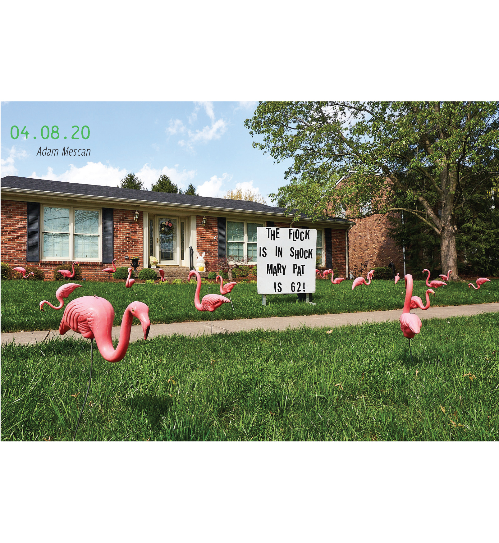 """A yard full of flamingos with a sign reading, """"The flock is in shock, Mary Pat is 62!"""" 04.08.2020, by Adam Mescan"""